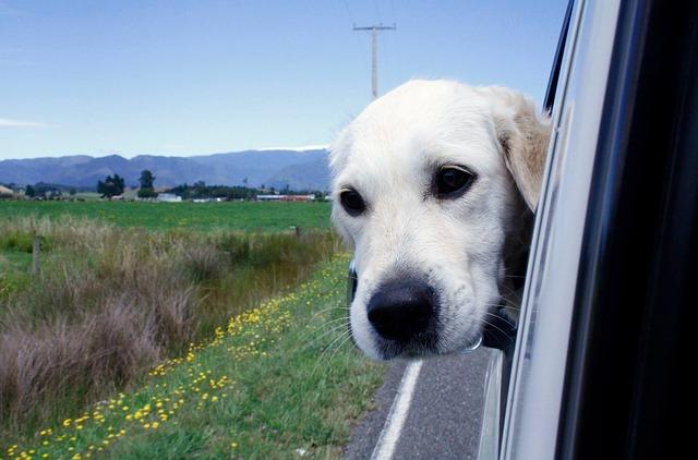 Tierversicherung,Haustier Versicherung, Mitfahrversicherung Haustiere