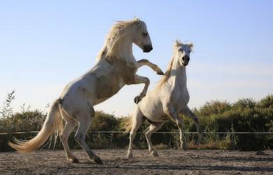 Pferdeversicherung, Tierlebenversicherung, Pferde Kosten