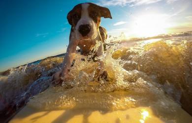 Hunde Unfallversicherung, Tierversicherung, Krankenversicherung Hund