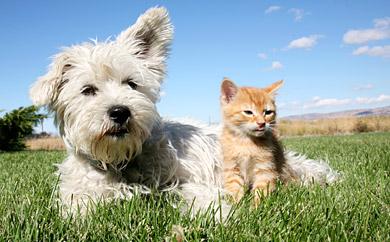Tier Versicherung