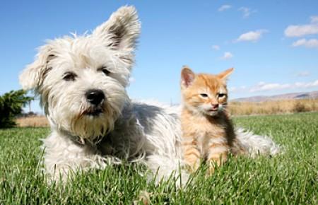 Tierversicherung, Pferde Versicherung, Hunde Versicherung
